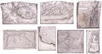 Reliefs d'étude de rochers